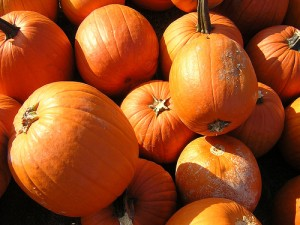 Low Oxalate Pumpkins